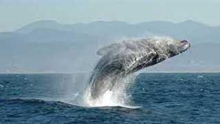 """""""بريدي"""".. نوع جديد من الحيتان يظهر في مياه أبوظبي"""